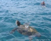 Swim with turtles in Zante